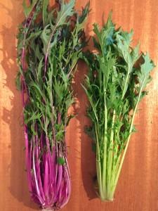 通常の水菜と違い、茎が赤紫色